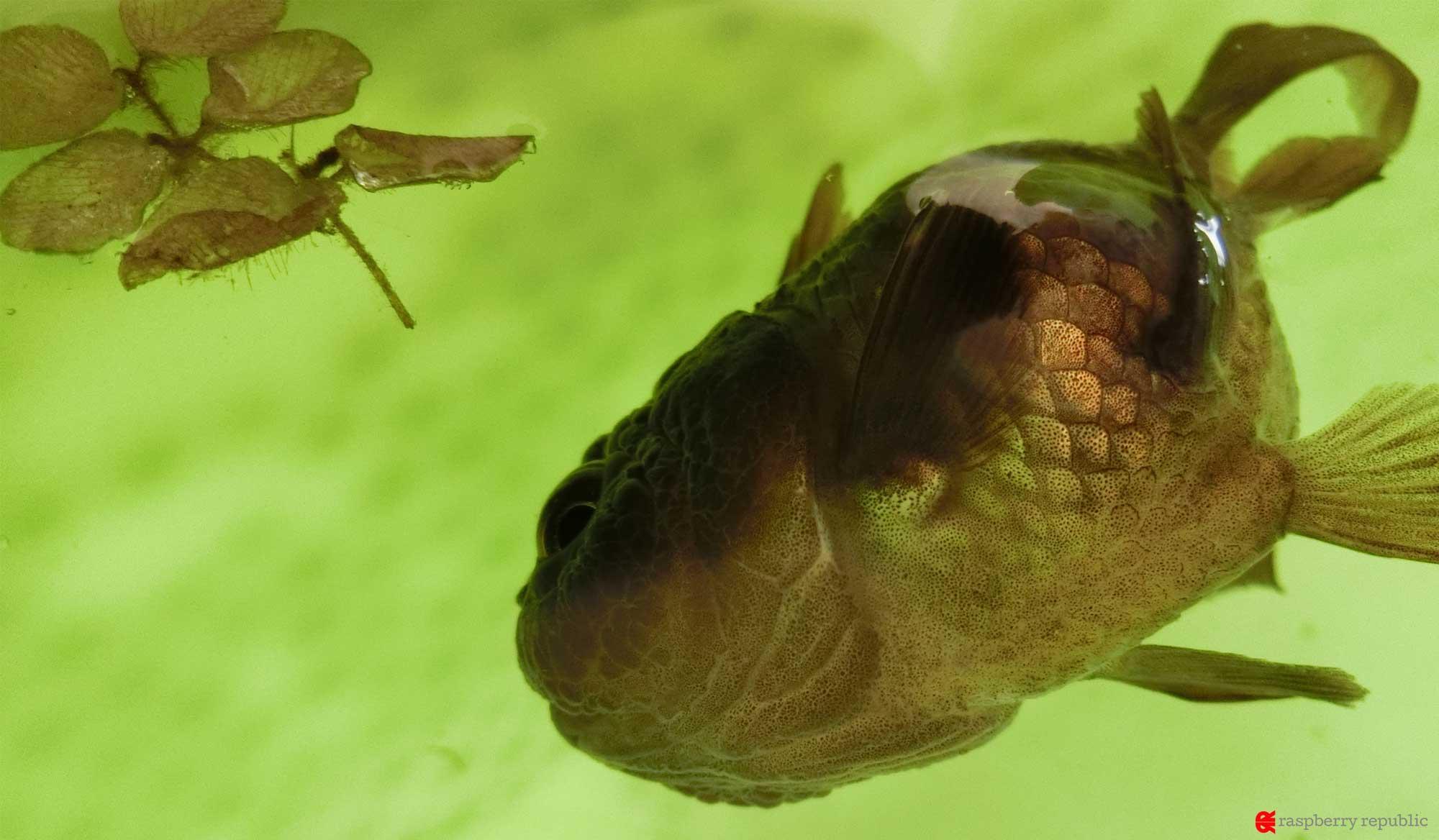 金魚の為に動物病院・獣医さんを探す