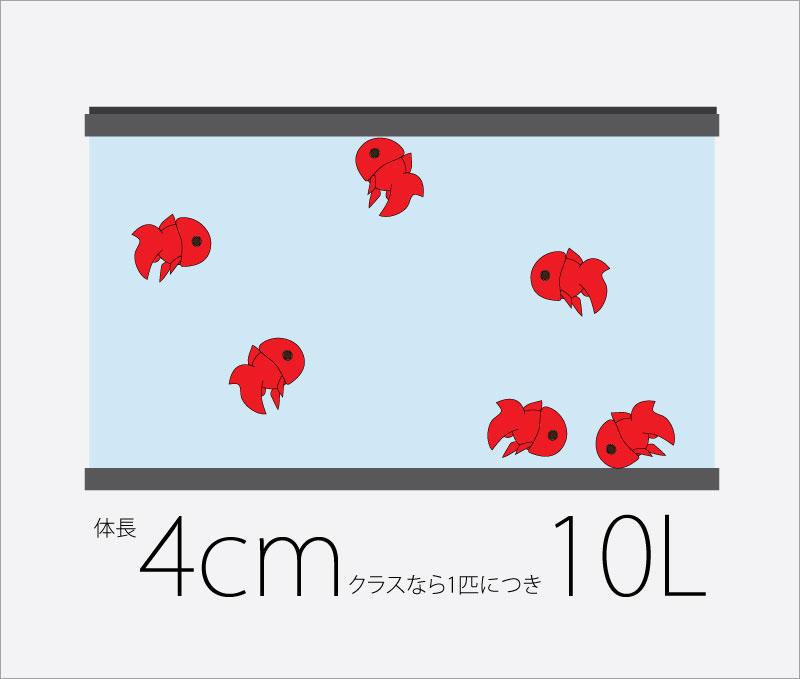 金魚のサイズと水量_10L