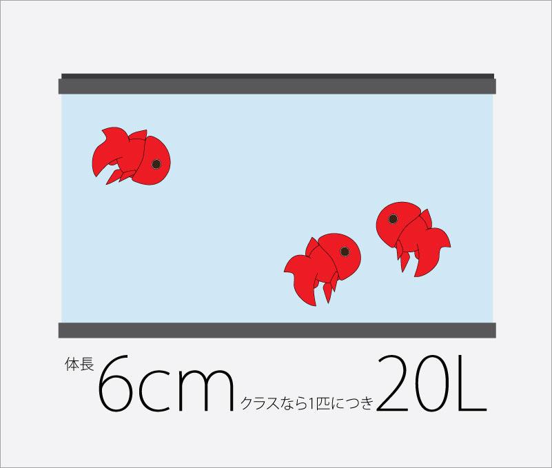 金魚のサイズと水量_20L